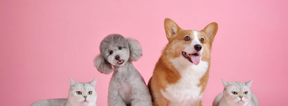 Calendriers de l'Avent pour animaux, chiens et chats